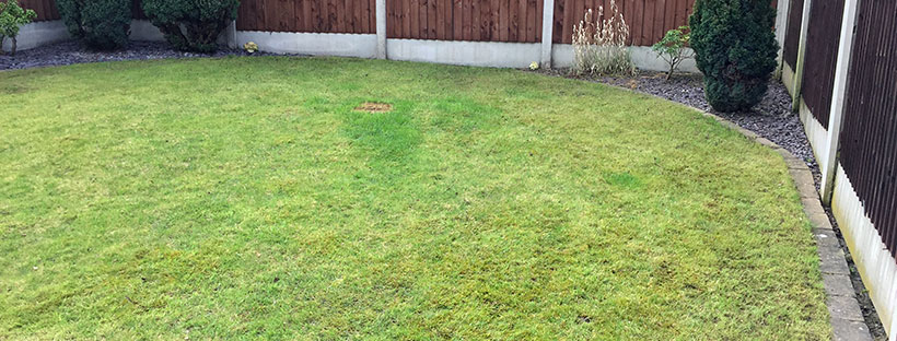 Dominate the neighbours – Mow No. 1 and pre-emergent application
