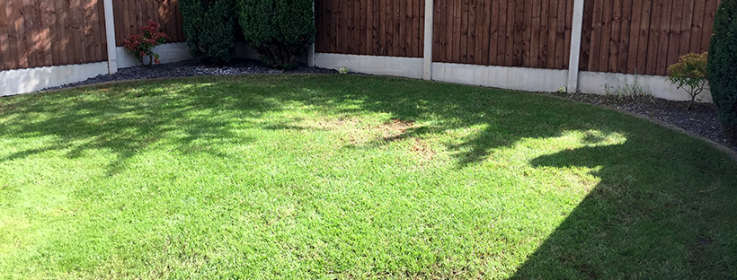 Dominate the neighbours – Mow No. 6 and fir tree trimming