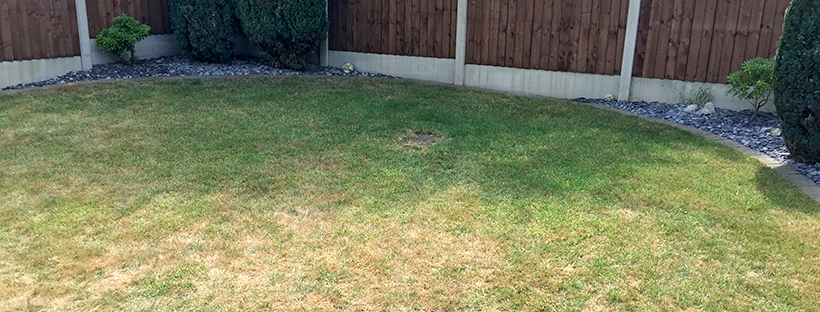 Dominate the neighbours – New planters and pre-emergent application