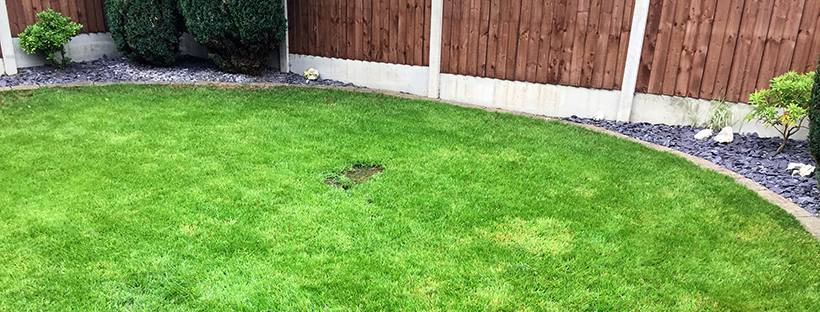 Dominate the neighbours – Mow No. 14 and soil aeration