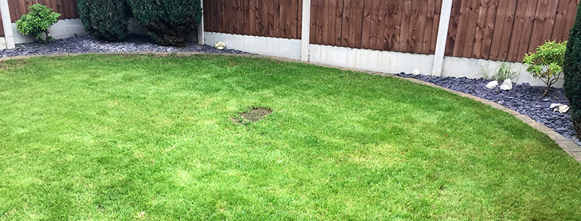 Dominate the neighbours – Mow No. 15 and fertiliser application