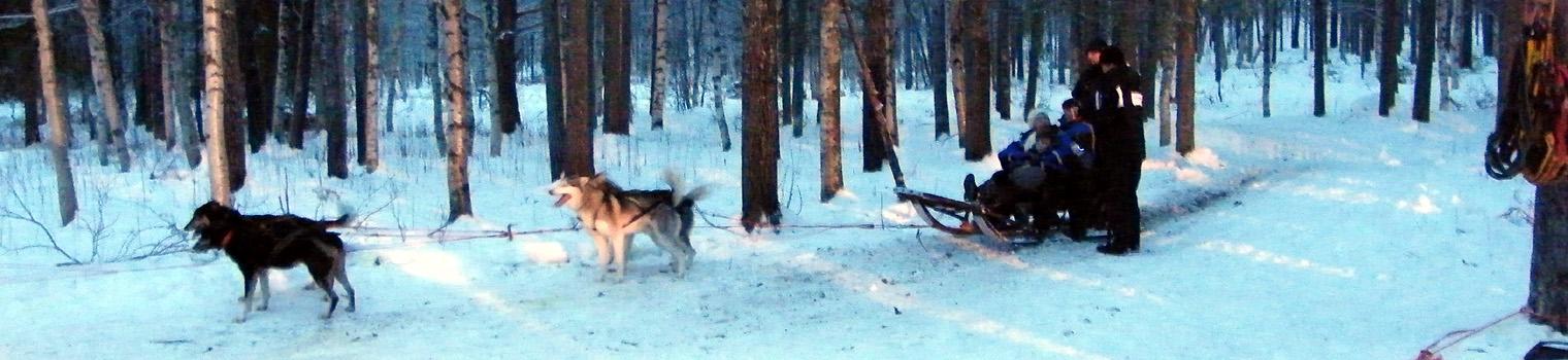 Reindeers and huskies and Santa, oh my!