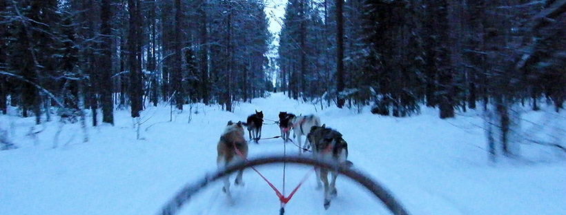 Driving a dog sled team, Levi, Finland